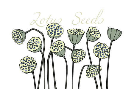 Hand drawn lotus seed pods Stock Illustratie