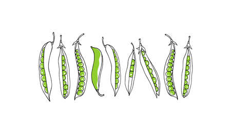 Vector card with hand drawn green pea pods. Beautiful food design elements Çizim