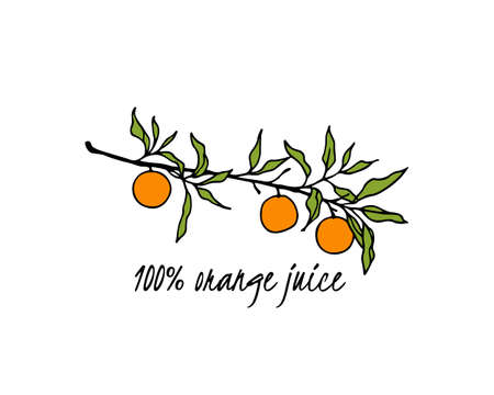 Vector card with hand drawn orange tree branch. Ink drawing, graphic style, beautiful design elements