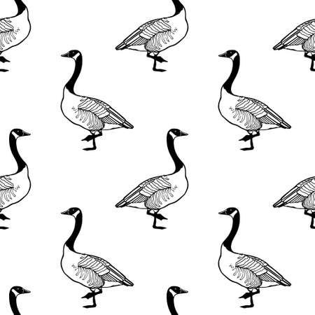 Vector seamless pattern with hand drawn standing wild geese. Beautiful animal design elements, ink drawing.