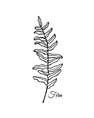 Hand drawn fern leaf Ilustração