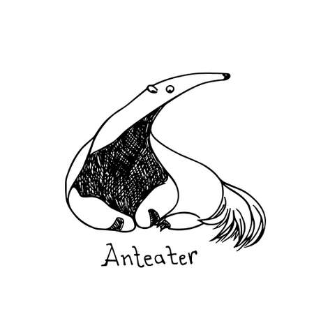 Vector illustration of hand drawn cute anteater resting on the ground. Beautiful ink drawing, sketch style. Perfect design elements, animal illustration