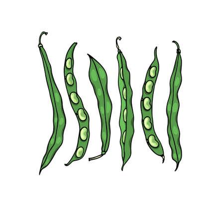Hand drawn bean 向量圖像