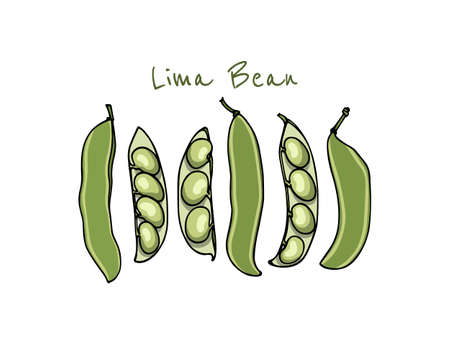 Vector card with hand drawn lima bean pods. Beautiful food design elements, ink drawing