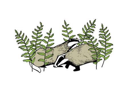 Hand drawn badgers