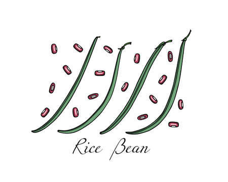 Vector card with hand drawn rice bean pods. Beautiful food design elements, ink drawing