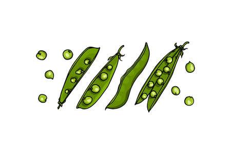 Hand drawn pea pods 向量圖像