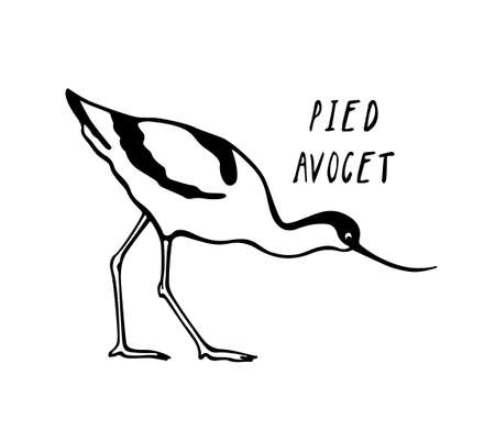 Hand drawn avocet Ilustracja