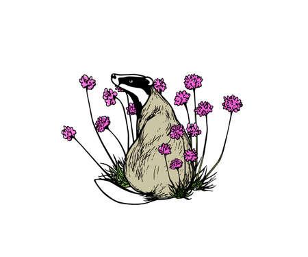 Hand drawn badger