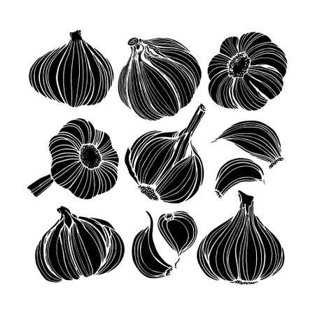 Hand drawn garlic Çizim