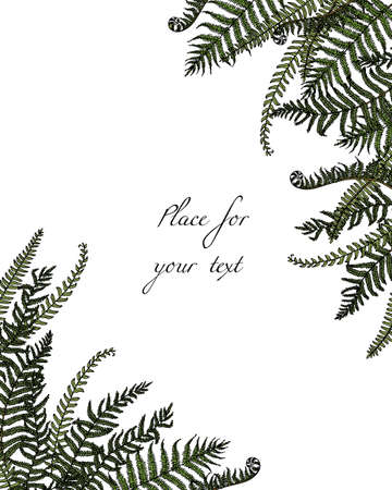 Hand drawn fern leaf Ilustracja