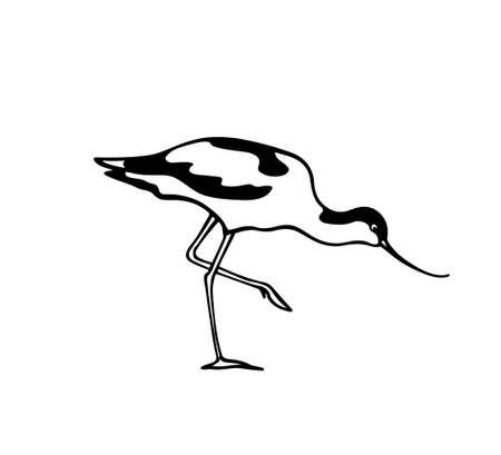 Hand drawn avocet 向量圖像
