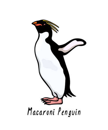 Vector card with hand drawn cute Macaroni penguin. Ink drawing, funny illustration, beautiful animal design elements.