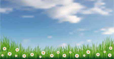 Vector green grass with daisies. Blue sky with clouds. Vector illustration.