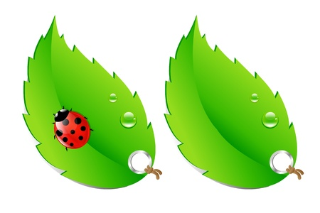 leaf insect: 2 Green Labels, Leaves With Ladybug, Isolated On White Background, Vector Illustration