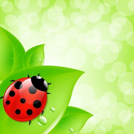 ladybug on leaf: Background With Ladybug On Leaf, Vector Illustration