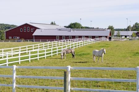 Paardenboerderij
