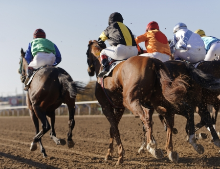Close-up van het racen paarden starten van een ras