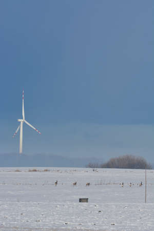 winter field: Winter field of electric turbines and deer Stock Photo