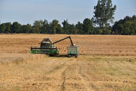 Harvest in the field, harvester during harvest