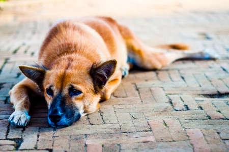 Homeless Lonely Street Dog