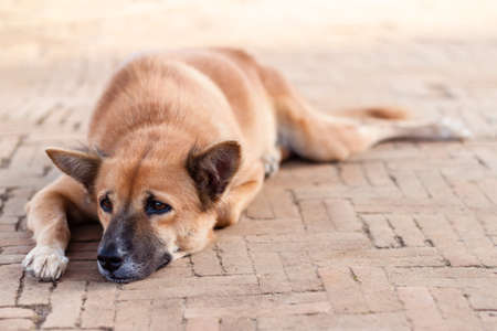 Homeless Lonely Street Dog waiting for someone on the footpath