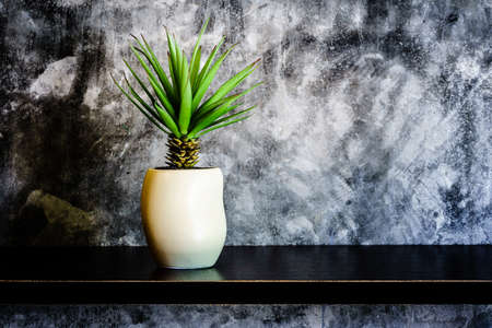 wall decor: Green decorative plant near the cement wall , rustic home interior decor with copy space Stock Photo