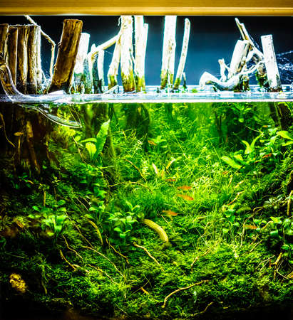 Green beautiful planted tropical freshwater aquarium with red shrimps