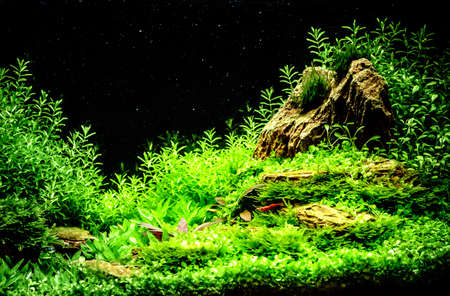 Green beautiful planted tropical freshwater aquarium Stock Photo