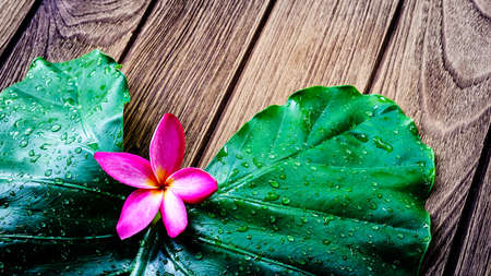tonga: Frangipani or Plumeria flower beautiful colors with fresh green leaf on wooden background concept Stock Photo