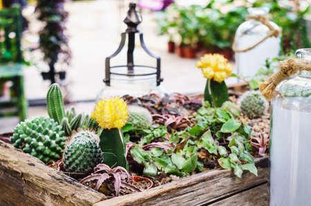 Kleine Cactus en Succulent in houten dienblad voor huisdecoratie