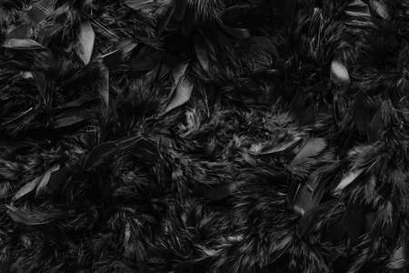 close up of dark black feather wool texture abstract background, black feathers fur texture fashion background concept
