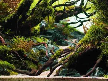 Natura morta ravvicinata di un bellissimo scape tropicale aqua, pianta verde dell'acquario della natura un pesce colorato tropicale in acquario.
