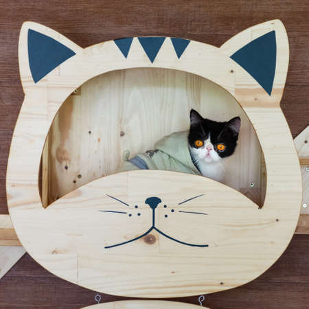 Funny portrait of  black and white cat looking with funny emotions face  on the cat face shelf. Cute little cat sitting under on DIY wooden cat face shelf.