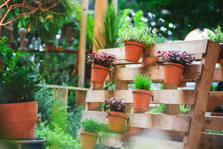 DIY recycled wooden pallet for flower pots. Storage industrial pallet used in gardening for a wall decoration as a shelf for flowerpots. Garden with planters made of recycled wooden pallets Zdjęcie Seryjne