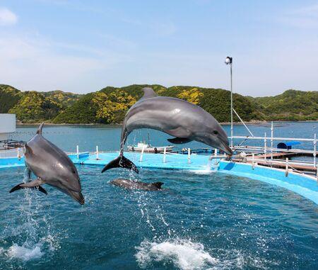 bottlenose: Dolphin diving pool