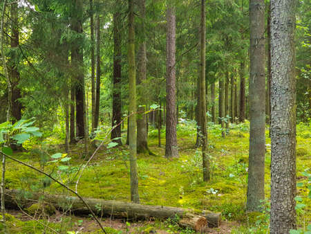 Inside view of the forrest during summer with trees, grass and leafs. 写真素材 - 129251491