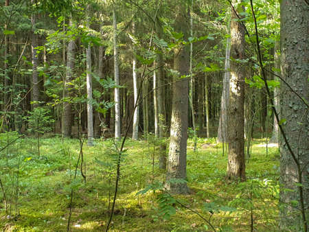Inside view of forrest during summer with trees grass and leafs. 写真素材 - 129288455