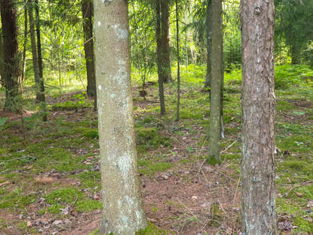 Inside view of the forrest during summer with trees, grass and leafs.