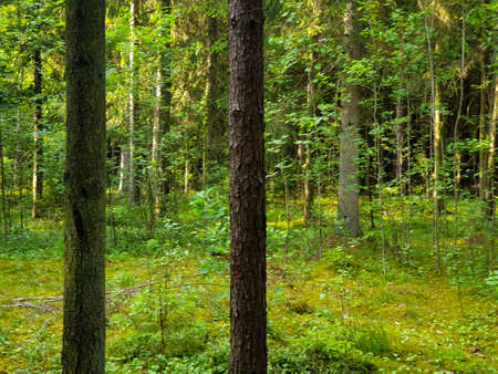 Inside the forrest where trees are growing during summer.