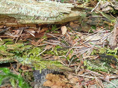 Texture of fallen tree wood in forrest during summer. Closeup of wood background. 写真素材