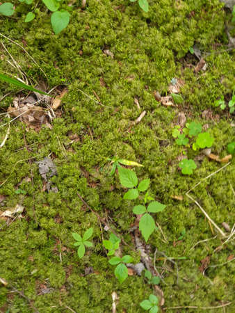 Closeup of forrest ground with moss, tree branches, grass, leafs during summer 写真素材