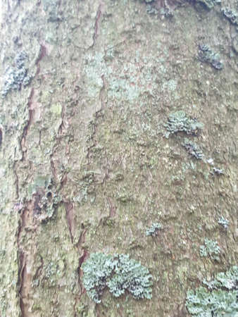 Tree trunk texture in forrest during summer. Closeup of tree background 写真素材