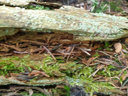 Texture of fallen tree wood in forrest during summer. Closeup of wood background. 写真素材 - 128925457