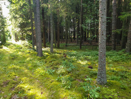 Inside view of forrest during summer with trees grass and leafs. 写真素材 - 128925902