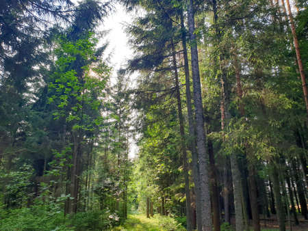 Inside view of forrest during summer with trees grass and leafs. 写真素材 - 129288569