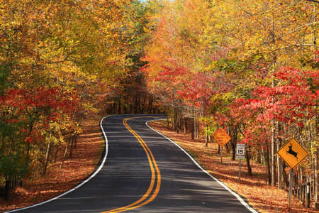 A colourful curving autumn road photo
