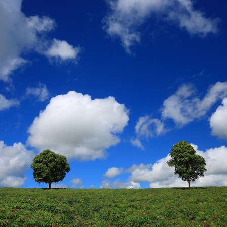 Green fields, the blue sky and two trees photo