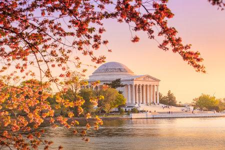 flor cerezo: el Jefferson Memorial en el Festival de los Cerezos en Flor. Washington, DC