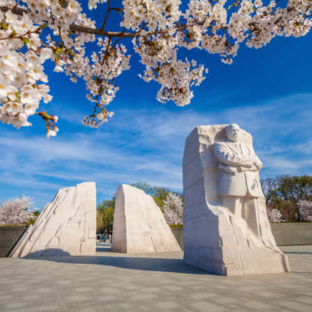 Martin Luther King Monument surrounded by cherry blossoms in Washington DC, USA